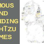 famous-shih-tzu-dog-names