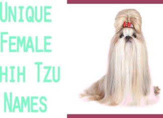 cute shih tzu female-names-and-meanings