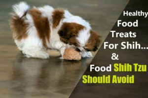 food-shih-tzu-should-eat-or-not