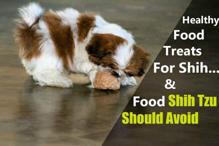 food-shih-tzu-should-eat-or-not