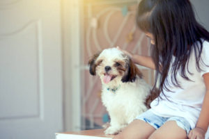 effective-shih-tzu-training-techniquesq