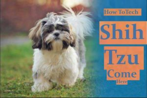 Watching For Shih Tzu Potty Warning Signs