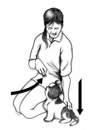 training-shih-tzu-sit-command-by-luring-rewarding-technique