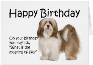 shih-tzu-happy-birthday-wishes