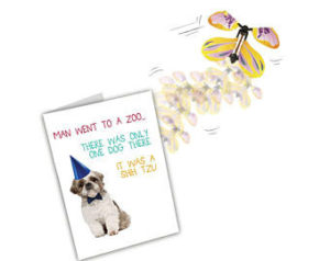 birthday-wish-for-shih-tzu